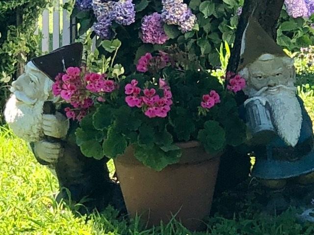Fronte liberazione nani giardino